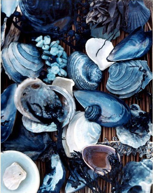 pics-of-oyster-shells-from-www_littlebuledeer_com_1