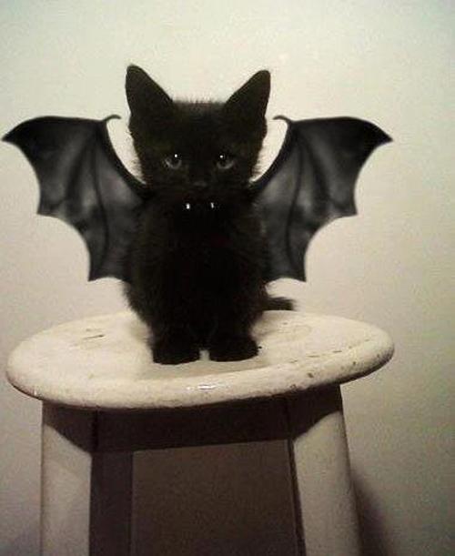 cat-vampire-halloween-costume