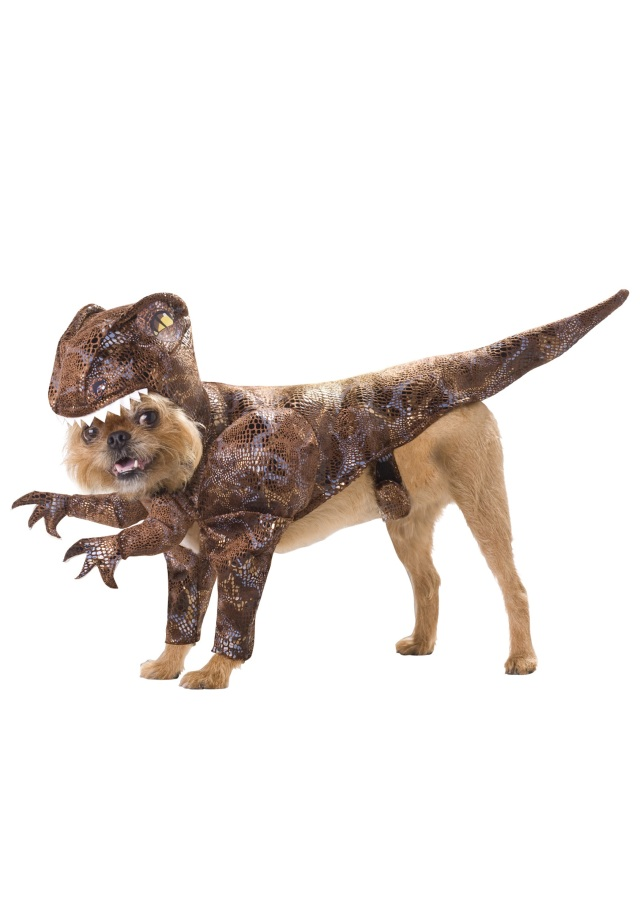 raptor-pet-costume