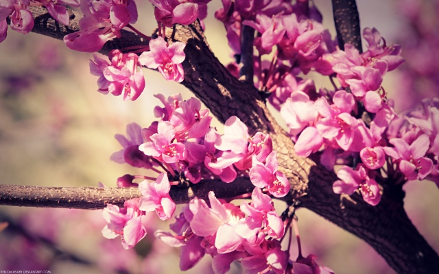 spring-tumblr-photography