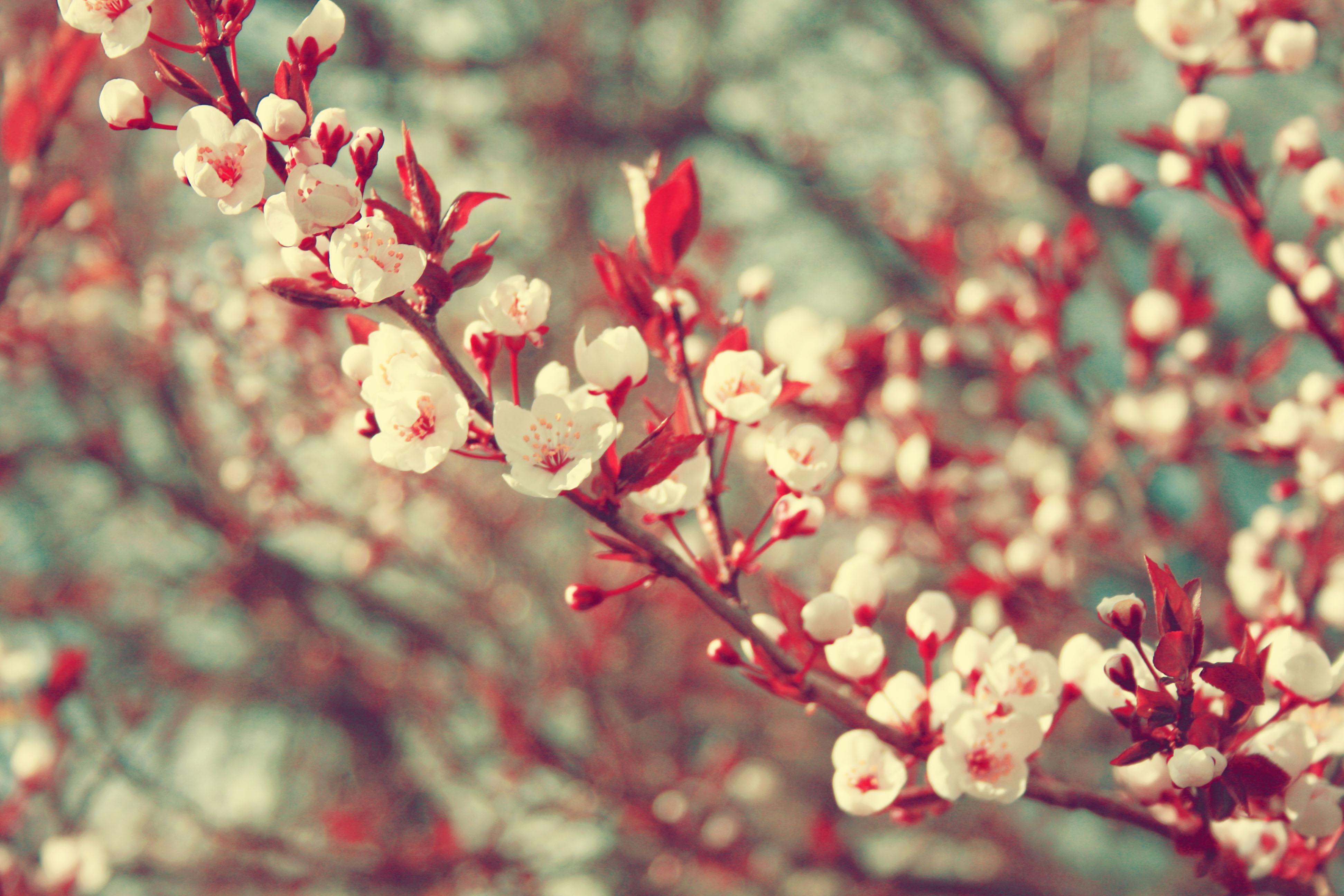 tumblr wallpaper floral hd - photo #39