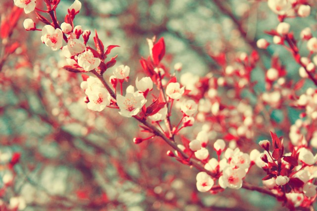 spring-tumblr-photos